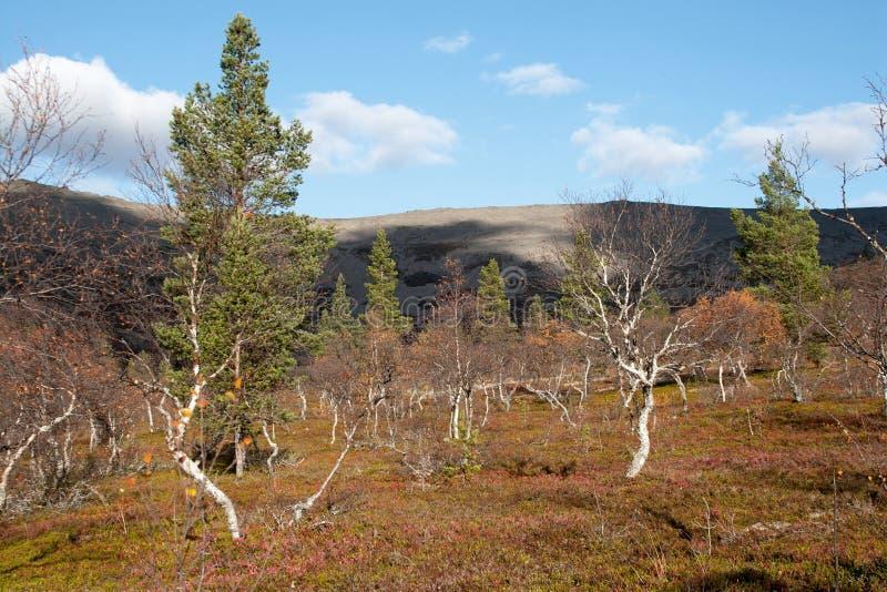晴朗的秋天在北方针叶林森林里 库存照片