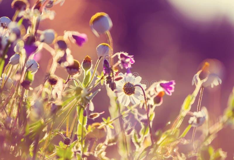 晴朗的草甸 库存照片