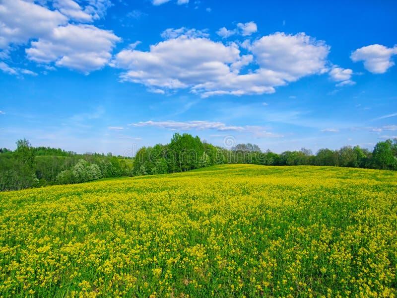 晴朗的草甸 库存图片