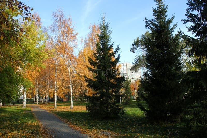 晴朗秋天的日 免版税库存照片