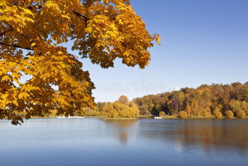 晴朗秋天背景美丽的日草横向的天空 图库摄影