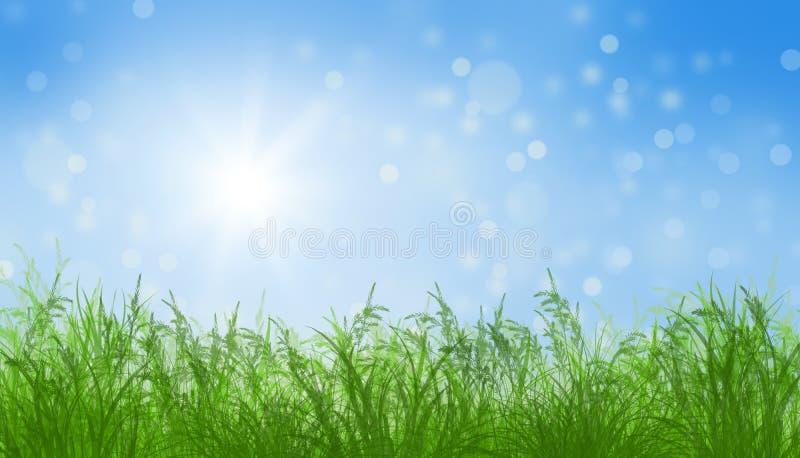 晴朗背景蓝色草绿色横向理想的天空的春天 皇族释放例证