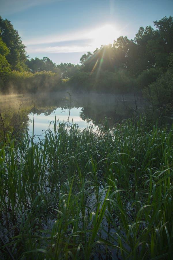 朝阳亮光的光芒和有沿海薹的一个森林湖 库存照片