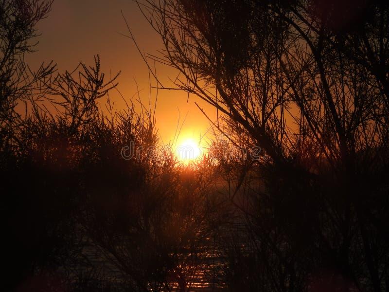 朝阳的第一光芒 自然海景有发光的太阳看法通过华美的橙色日出的野生布什 库存图片