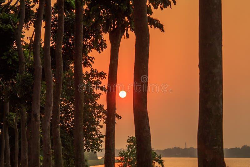 朦胧的日落通过treeline 太阳照明设备在晚上 农村印度市金黄小时视图  免版税库存照片