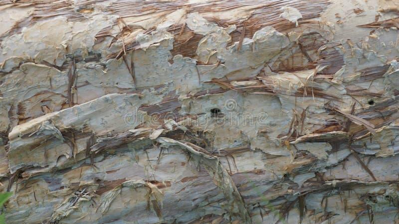 木主题,木纹理可以使用作为图片的背景 库存图片
