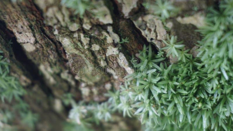 木主题,木纹理可以使用作为图片的背景 图库摄影