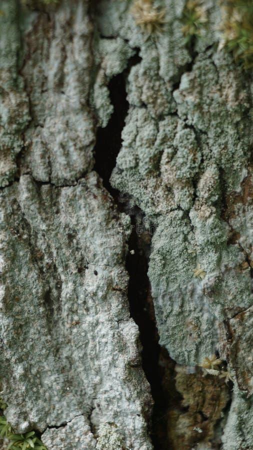 木主题,木纹理可以使用作为图片的背景 库存照片