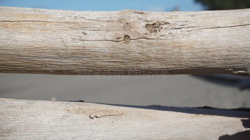 木主题,木纹理可以使用作为图片的背景 免版税库存图片