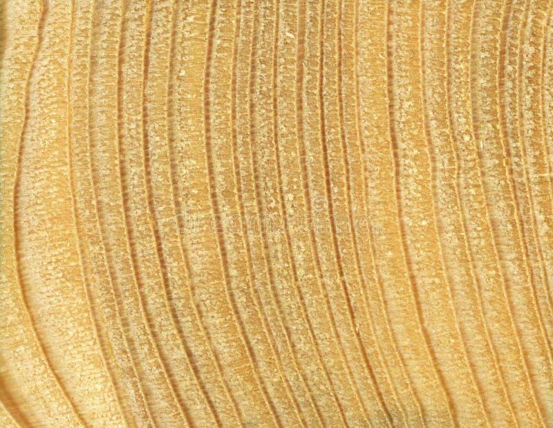 木五谷纹理,松木 木头,木五谷,十字架裁减的纹理 免版税库存图片