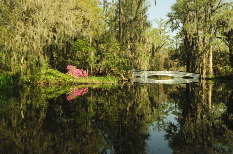 木兰与桥梁的庭院场面在春天 库存照片
