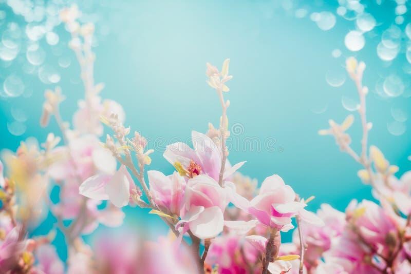 木兰和bokeh美丽的桃红色开花与太阳亮光的在绿松石天空背景,正面图的, 免版税库存图片