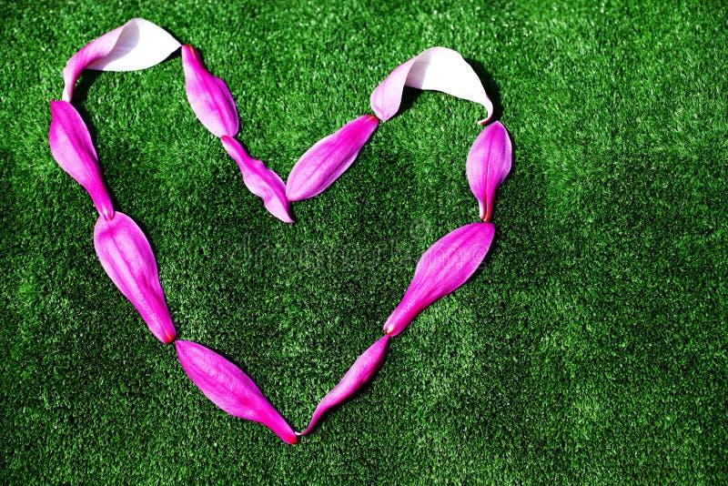 木兰瓣心脏标志没人 库存图片