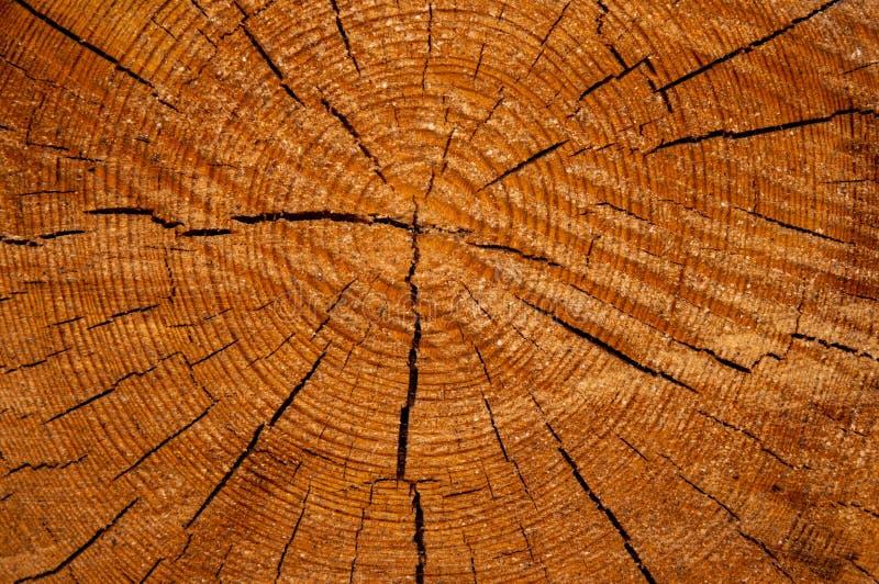 木切片cruba的纹理 库存照片