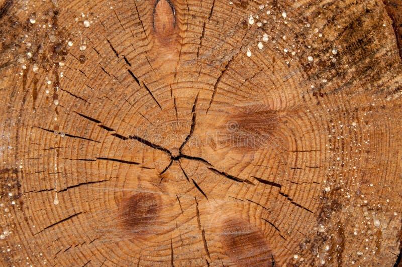 木切片cruba的纹理 免版税库存照片