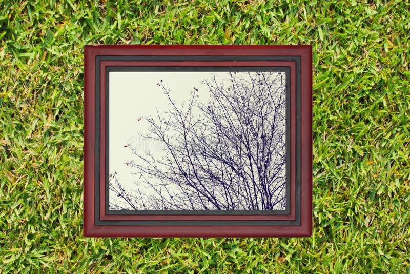 木制框架有af树干燥分支看法,在绿草 免版税图库摄影