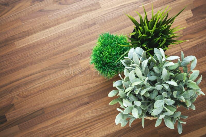 木办公桌背景的植物 库存图片