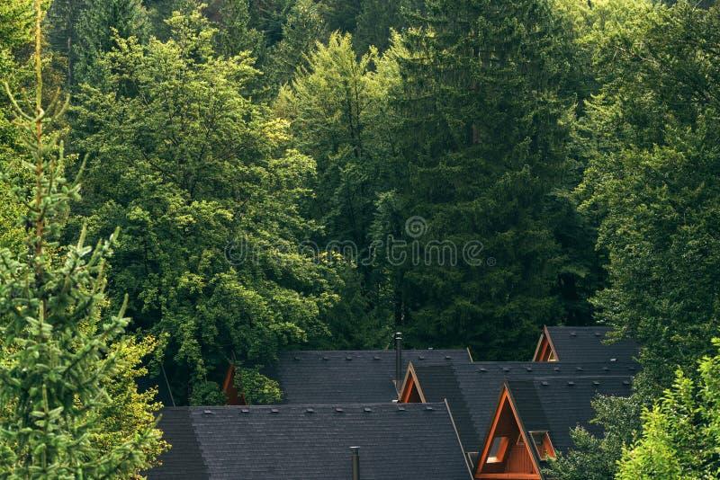 木原木小屋屋顶在森林里 库存图片