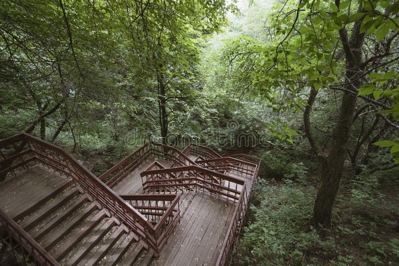 木台阶在公园 库存图片