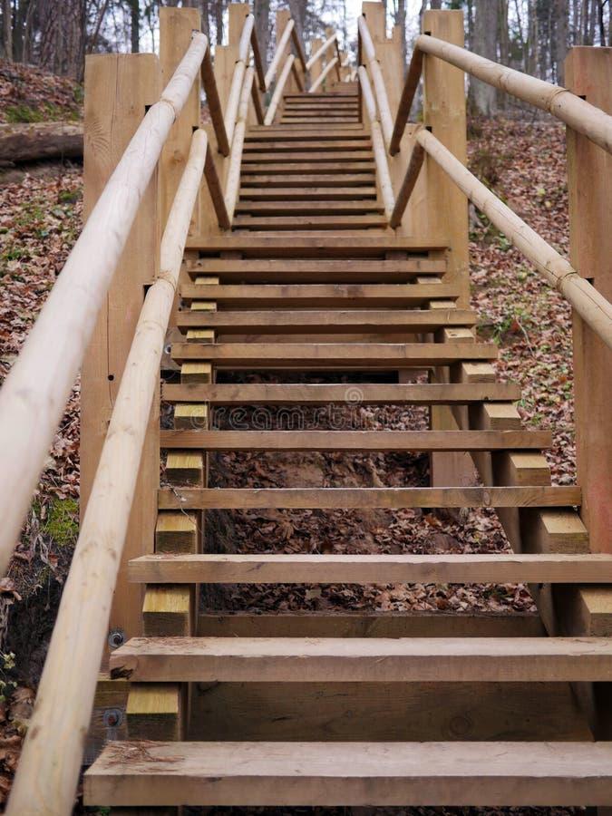 木台阶在森林里 免版税库存图片