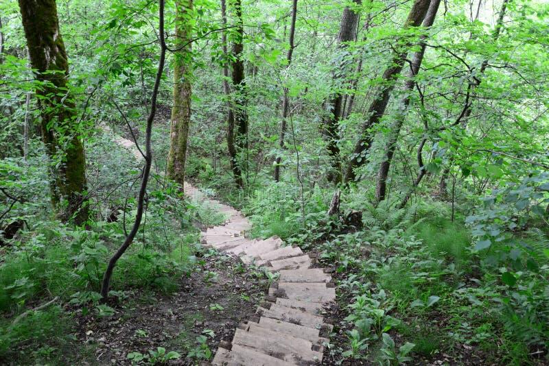 木台阶在森林锡古尔达里 免版税库存照片