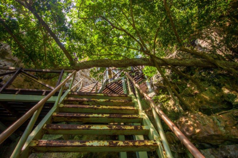 木台阶临近绿色盐水湖 图库摄影