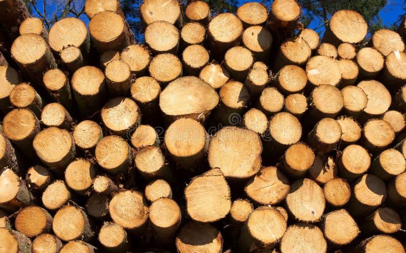 木堆我林业 免版税库存图片