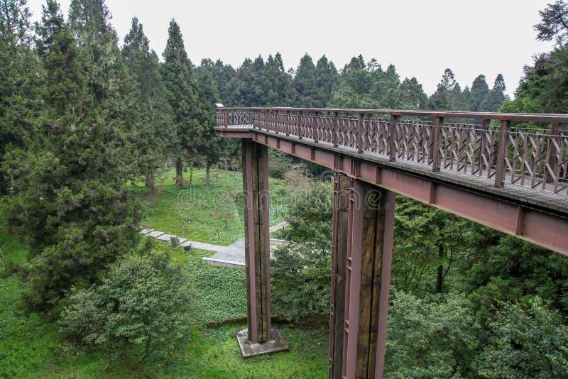 木天空走道在台湾的alishan国立公园 免版税库存图片