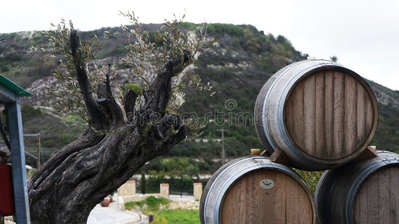 木头和桶在自然背景的酒在塞浦路斯的 免版税库存图片