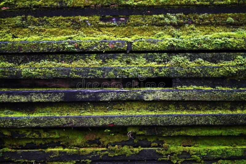 木头和真菌 图库摄影