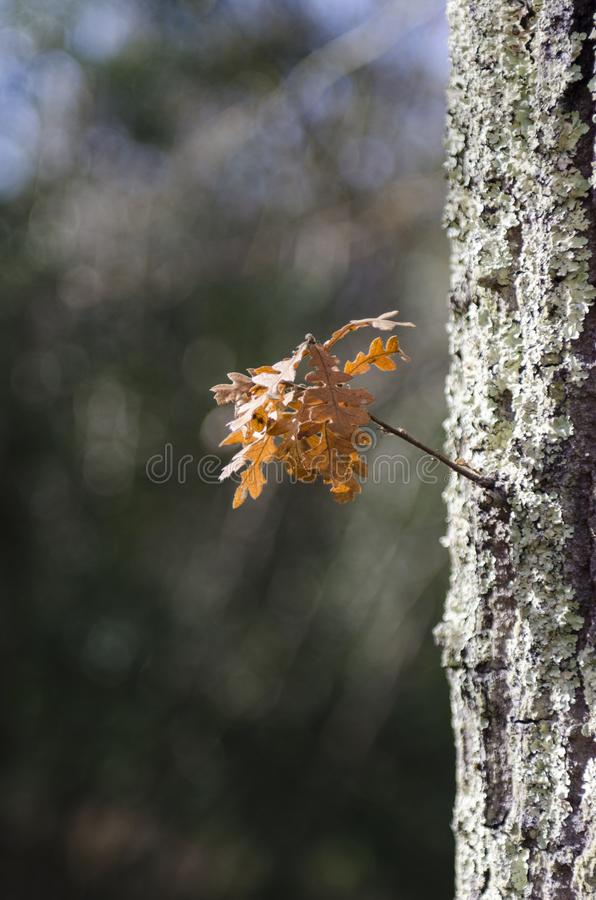 木头在雨以后的秋天,巨大bokeh 免版税库存图片