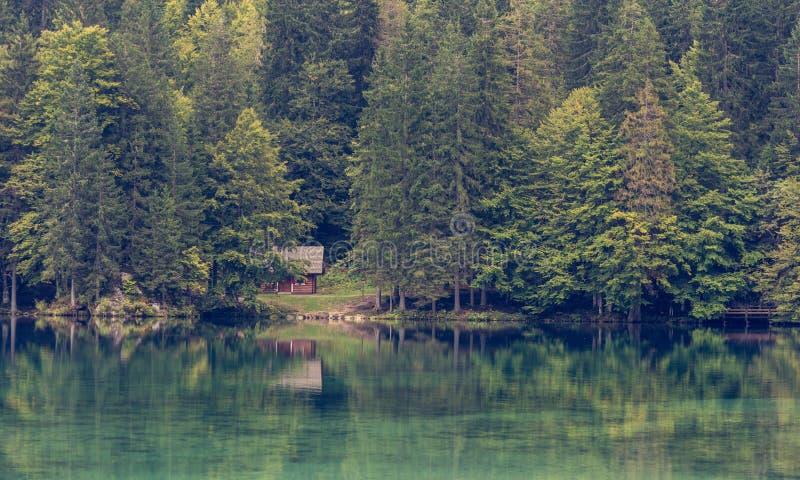 木客舱围拢与杉木森林在湖岸 库存图片