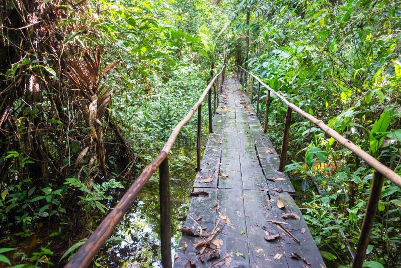木密林桥梁 库存照片