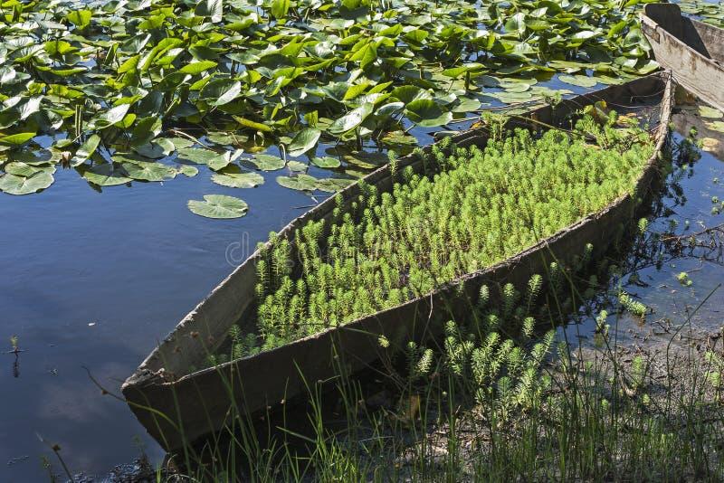 木平底的小船 库存照片