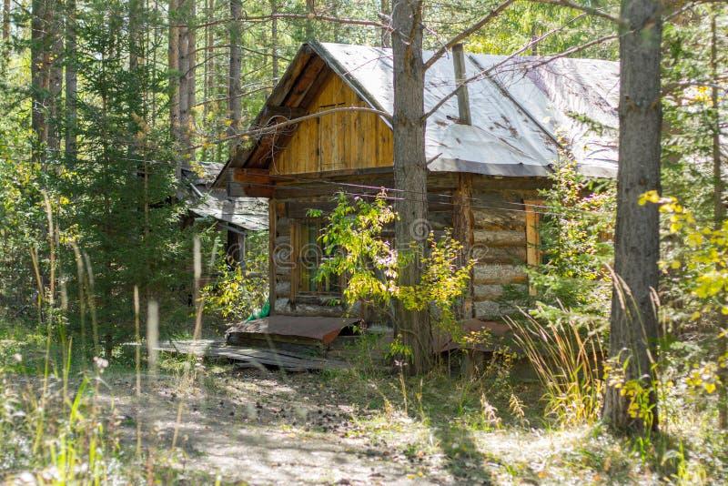 木房子在树中的森林在日落 免版税库存照片