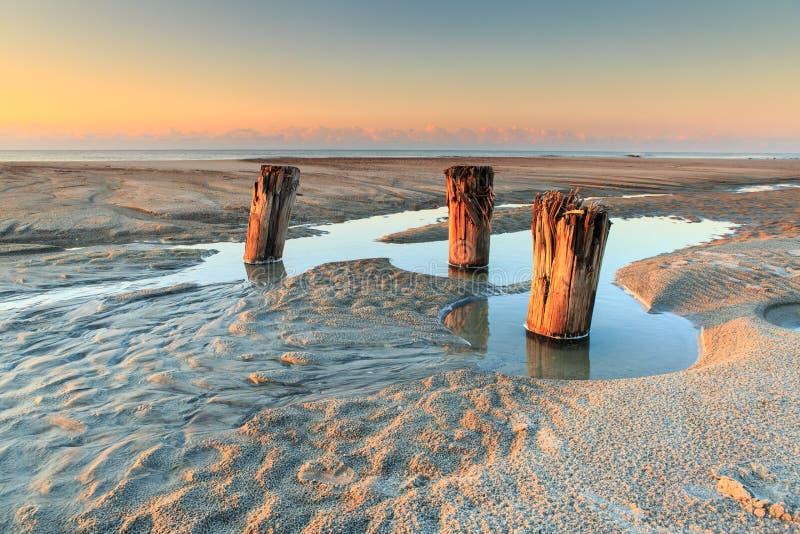 木打桩处于低潮中 库存照片