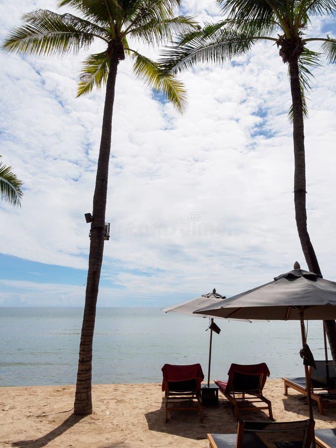 木折叠椅和伞在椰子旁边 免版税库存图片