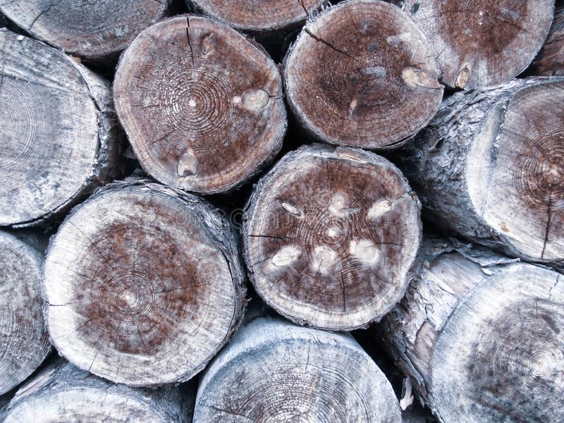 木日志背景:接近被切开的树干,松木在库存 与结,镇压的老干燥成颗粒状的木头和 图库摄影