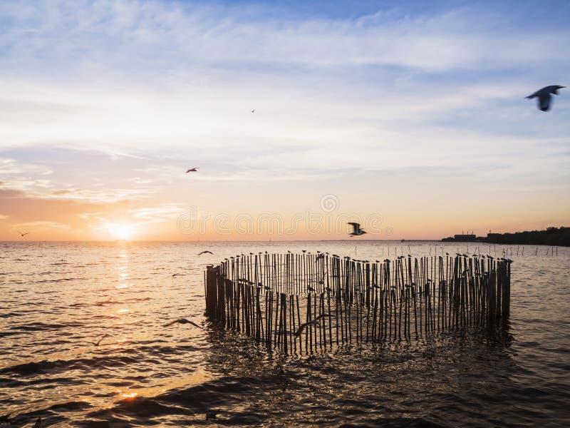 木木材为站立在s的心脏形状的海鸥鸟设置了 免版税库存照片
