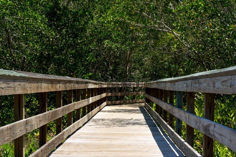 木木板走道低看法在佛罗里达 库存照片