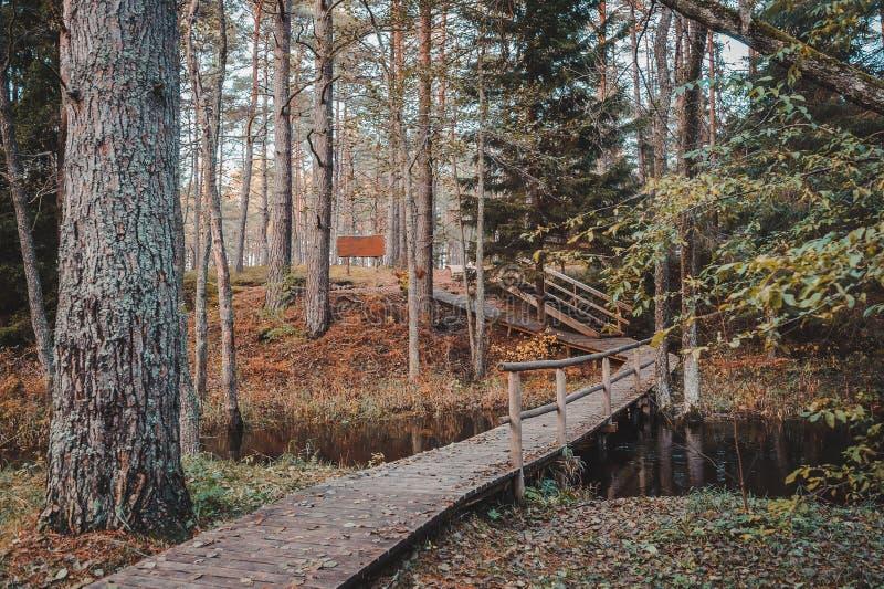 木木板走道和一座桥梁横跨一条小河mixted森林秋天风景的 库存照片