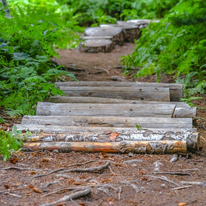 木杆和树桩步在一条供徒步旅行的小道 库存图片