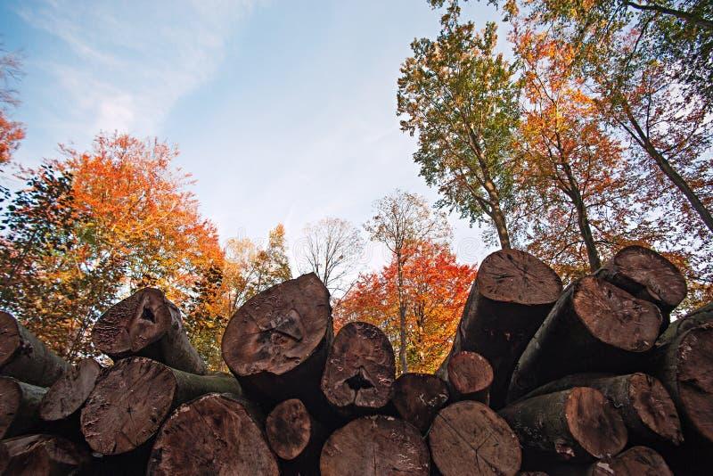 木材和秋天 库存照片