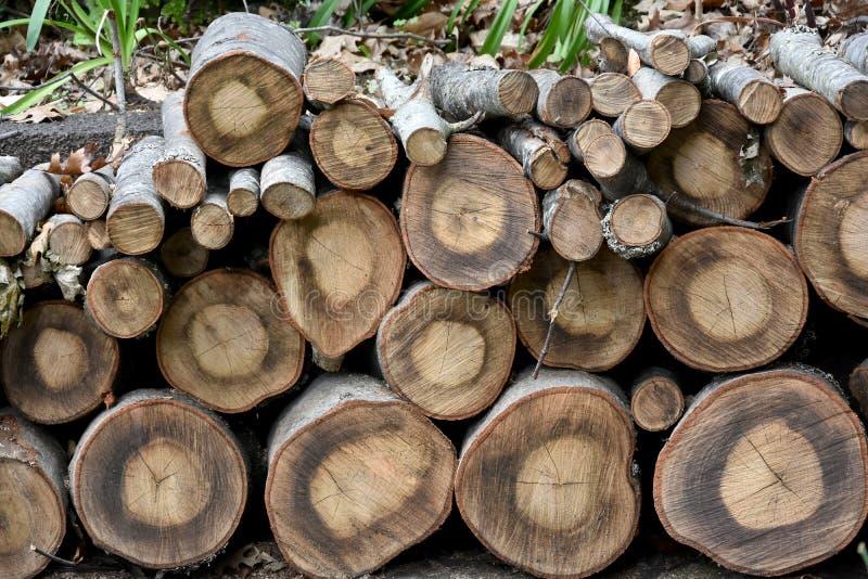 木材木头 库存照片