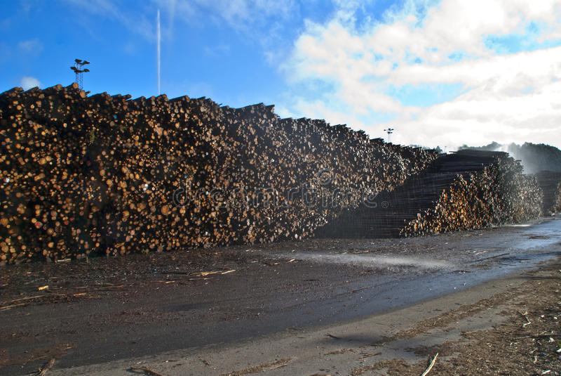 木材浇灌 免版税库存图片