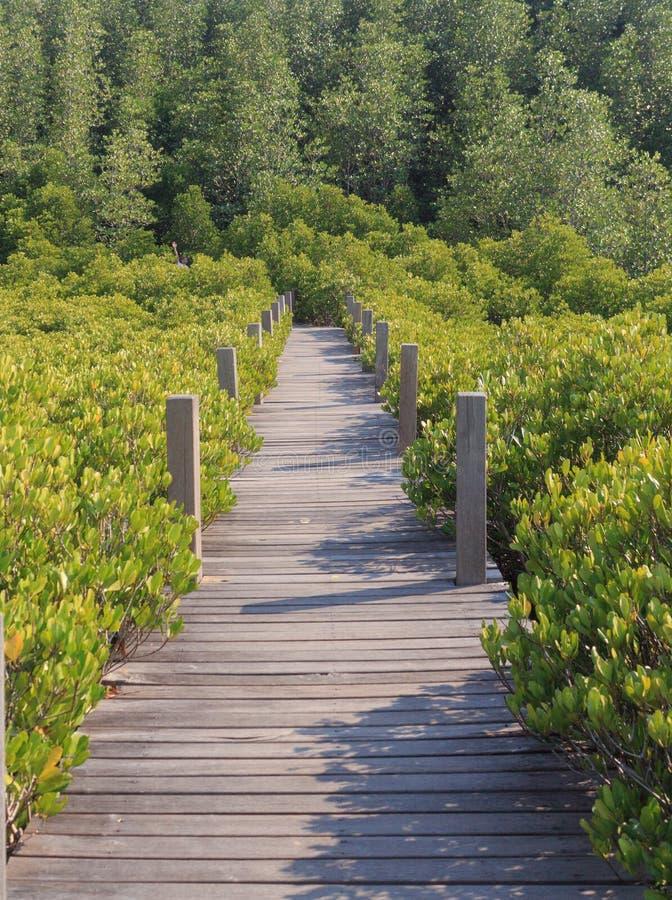 木板导致目的地的步行道路 免版税库存照片