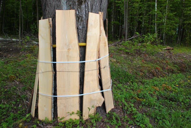 木板条的保护的路旁树树干在修路时 免版税图库摄影