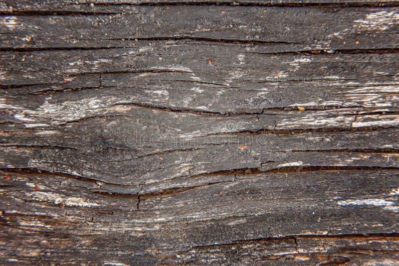 木板条纹理背景 库存图片