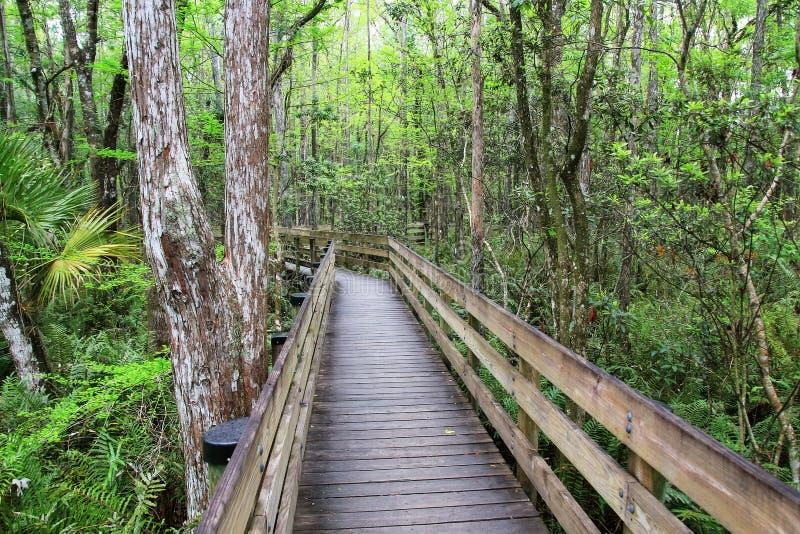 木板走道在佛罗里达沼泽的地区  库存照片