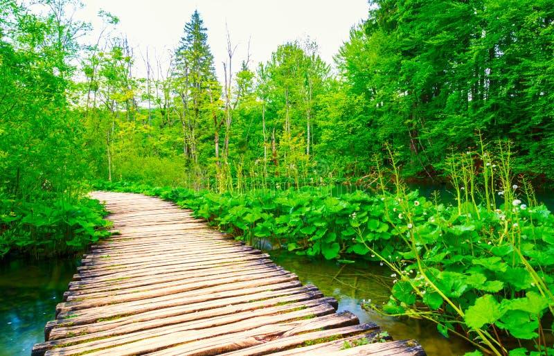 木板走道在公园Plitvice湖 免版税库存图片